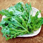 有機肥料100%栽培(無化学肥料)菊菜200g 【奈良県産 他】
