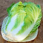 有機肥料100%栽培(無化学肥料)白菜【岡山県産 他】
